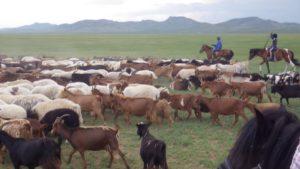 遊牧民と羊・山羊