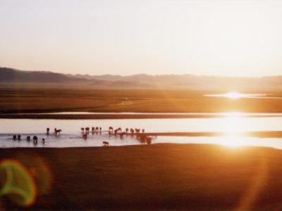 朝日の川に馬